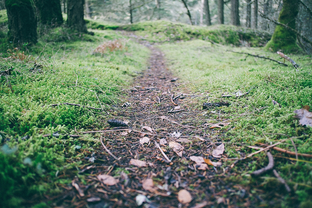 make-your-own-path_1000px